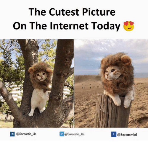 Internet, Today, and The Internet: The Cutest Picture  On The Internet Today  If @Sarcasmlol  @sarcastic Us  @Sarcastic Us