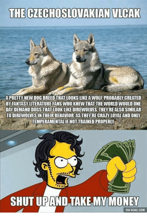 9gag, Game of Thrones, and Money: THE CZECHOSLOVAKIAN VLCAK  A PRETTY NEW DOG BREED THAT LOOKS LIKE A WOLF PROBABLY CREATED  BY FANTASY LITERATURE FANS WHO KNEW THAT THE WORLD WOULD ONE  DAY DEMAND DOGSTHATLOOKLKE DIREWOLVES,THEVRE ALSO SIMILAR  TO DIREWOLVESIN THEIR BEHAVIOR AS THEYRE CRATY LOYALAND ONLY  TEMPERAMENTALIF NOT TRAINED PROPERLY  r00  SHUT UPAND TAKE MY MONEY  VIA 9GAG.COM