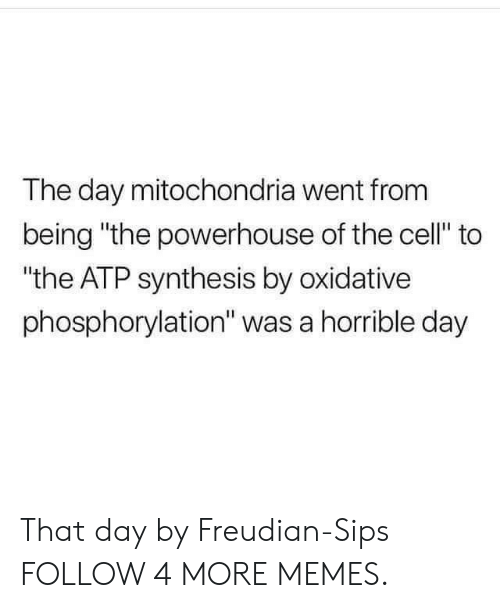 """atp: The day mitochondria went from  being """"the powerhouse of the cell"""" to  """"the ATP synthesis by oxidative  phosphorylation"""" was a horrible day That day by Freudian-Sips FOLLOW 4 MORE MEMES."""