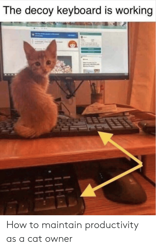productivity: The decoy keyboard is working How to maintain productivity as a cat owner