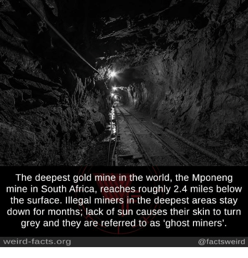 """Memes, 🤖, and Skins: The deepest gold mine in the World, the Mponeng  mine in South Africa, reaches roughly 2.4 miles below  the surface. Illegal miners in the deepest areas stay  down for months; lack of sun causes their skin to turn  grey and they are referred to as """"ghost miners'.  weird-facts org  @facts weird"""