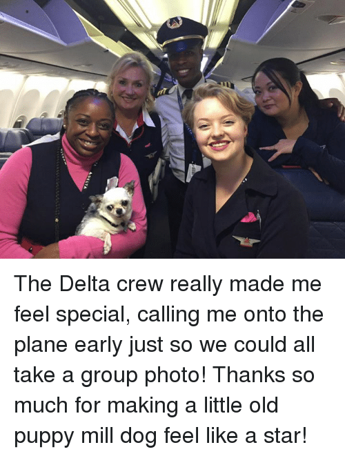 Memes, Delta, and Puppy: The Delta crew really made me feel special, calling me onto the plane early just so we could all take a group photo!  Thanks so much for making a little old puppy mill dog feel like a star!