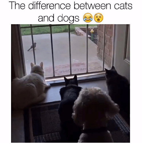 an analysis of the similarities and differences between cats and dogs A duke university study suggests that evolution can behave as differently as dogs and cats while the dogs depend on an energy-efficient style of four-footed running over long distances to catch their prey, cats seem to have evolved a profoundly inefficient gait, tailor-made to creep.