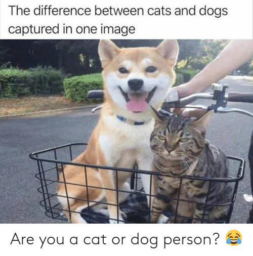 cat-or-dog: The difference between cats and dogs  captured in one image Are you a cat or dog person? 😂