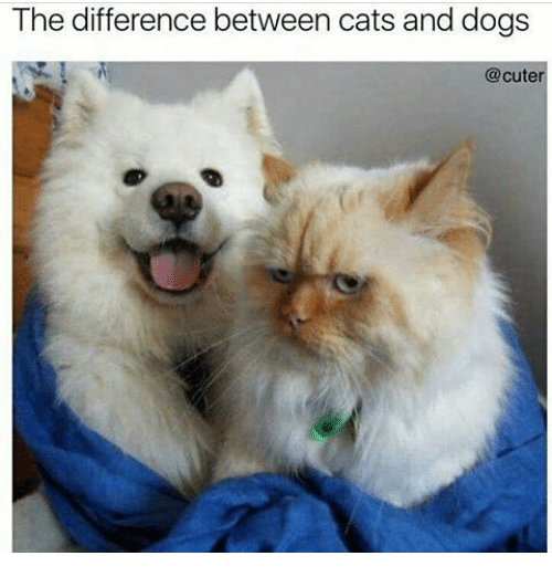 a comparison of the similarities and differences between dogs and cats Dogs vs cats comparison  to start with, let us discuss some similarities between dogs and cats, to understand the common problems that may occur if you keep these.