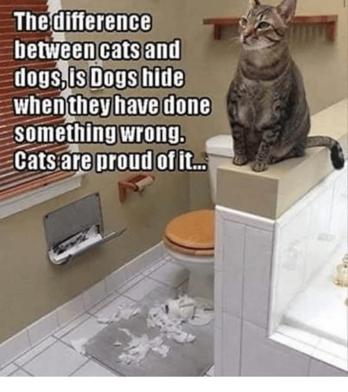 Diary Of A Cat And Diary Of A Dog