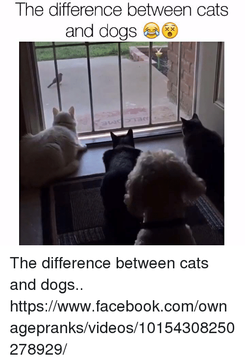 evaluating the differences between cats and What's the difference between a house cat and a tiger are domestic cats like tigers big cat 10 ways domestic cats and big cats are similar.