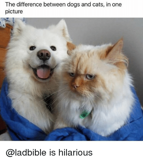 Cats, Dogs, and Funny: The difference between dogs and cats, in one  picture  Gr @ladbible is hilarious