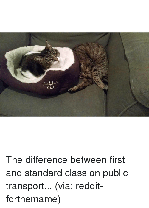 SIZZLE: The difference between first and standard class on public transport... (via: reddit-forthemame)