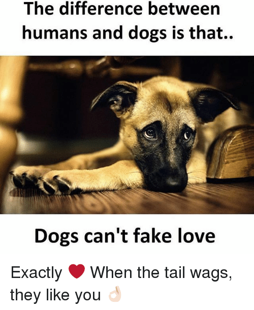 Dekh Bhai, International, and Tails: The difference between  humans and dogs is that..  Dogs can't fake love Exactly ❤️ When the tail wags, they like you 👌🏻