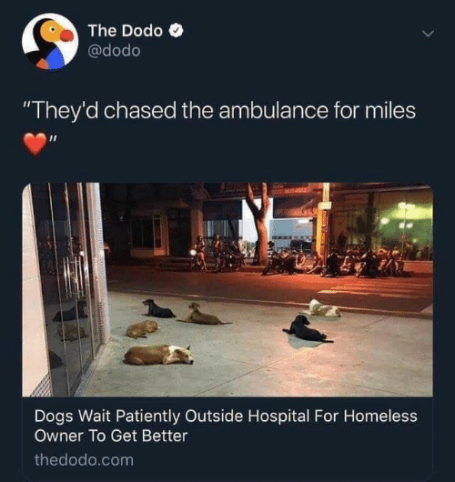 "patiently: The Dodo  @dodo  ""They'd chased the ambulance for miles  M14153  Dogs Wait Patiently Outside Hospital For Homeless  Owner To Get Better  thedodo.com"
