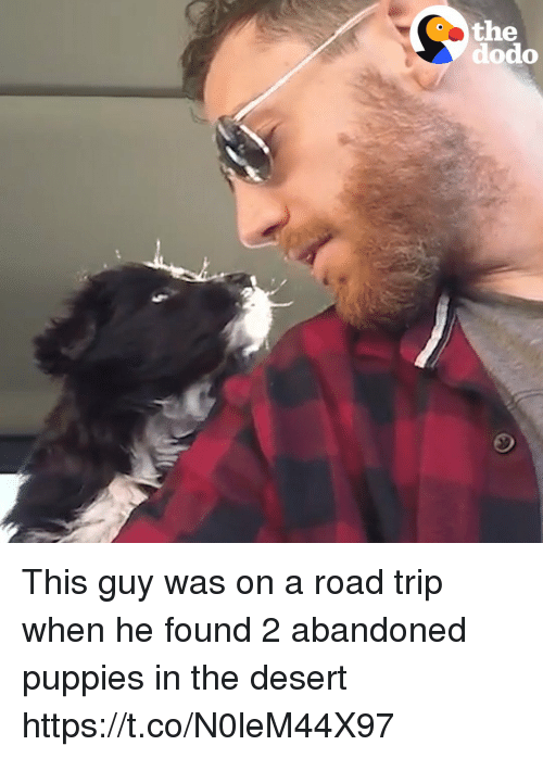 Puppies, Girl Memes, and Desert: the  dodo This guy was on a road trip when he found 2 abandoned puppies in the desert  https://t.co/N0leM44X97