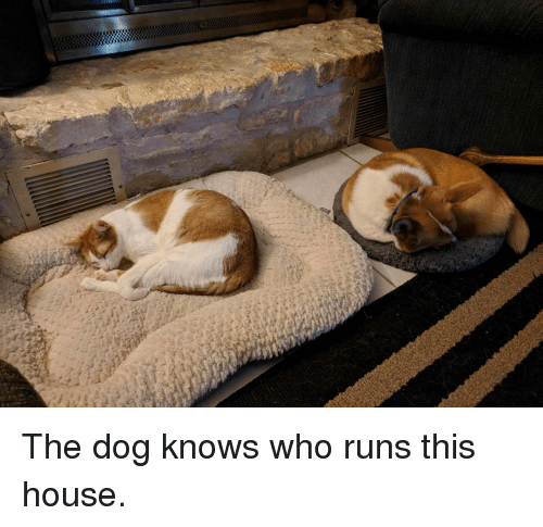 House, Dog, and Who: The dog knows who runs this house.