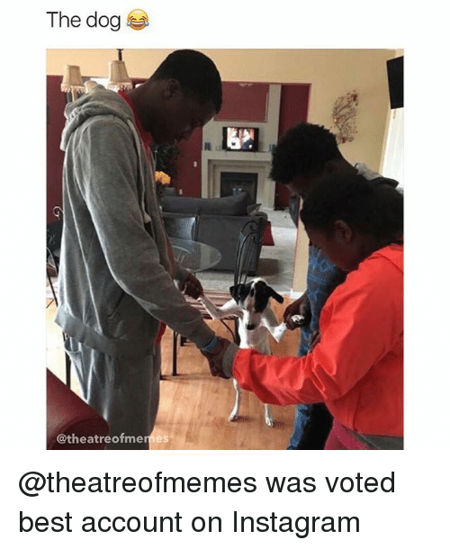 Instagram, Memes, and Best: The dog  @theatreofme  es @theatreofmemes was voted best account on Instagram