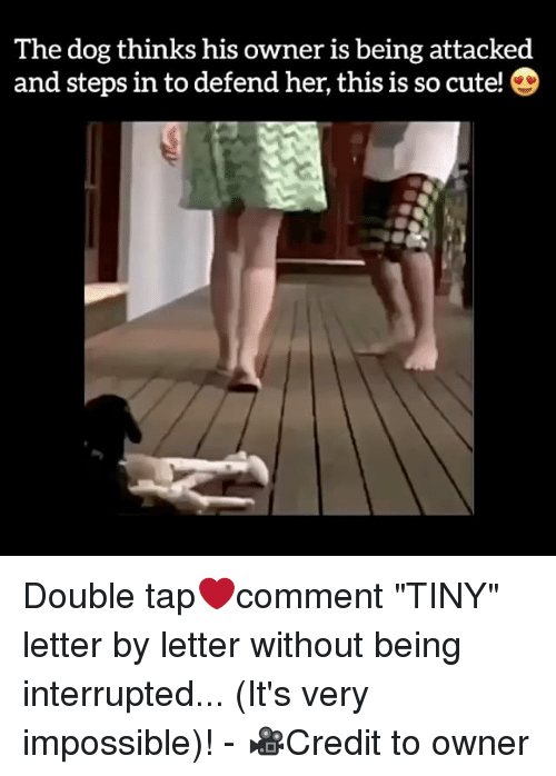"Memes, Impossibility, and 🤖: The dog thinks his owner is being attacked  and steps in to defend her, this is so cute! D Double tap❤️comment ""TINY"" letter by letter without being interrupted... (It's very impossible)! - 🎥Credit to owner"