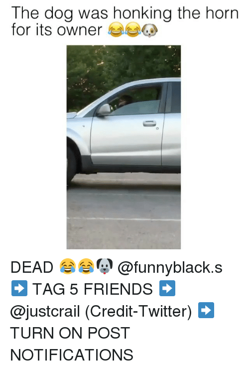 Friends, Twitter, and Dank Memes: The dog was honking the horn  for its owner DEAD 😂😂🐶 @funnyblack.s ➡️ TAG 5 FRIENDS ➡️ @justcrail (Credit-Twitter) ➡️ TURN ON POST NOTIFICATIONS