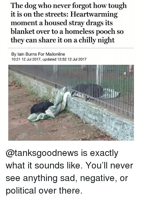 Homeless, Memes, and Streets: The dog who never forgot how tough  it is on the streets: Heartwarming  moment a housed stray drags its  blanket over to a homeless pooch so  they can share it on a chilly night  By lain Burns For Mailonline  10:21 12 Jul 2017, updated 12:52 12 Jul 2017 @tanksgoodnews is exactly what it sounds like. You'll never see anything sad, negative, or political over there.
