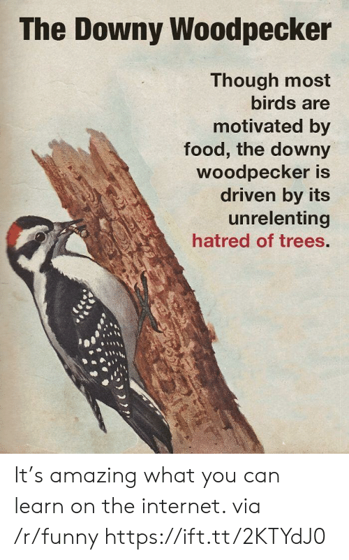 woodpecker: The Downy Woodpecker  Though most  birds are  motivated by  food, the downy  Woodpecker is  driven by its  unrelenting  hatred of trees. It's amazing what you can learn on the internet. via /r/funny https://ift.tt/2KTYdJ0