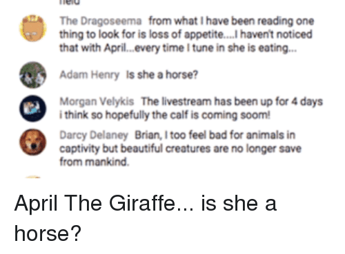 Animals, Bad, and Beautiful: The Dragoseema from what Ihave been reading one  thing to look for is loss of appetite....Ihavent noticed  that with April. every time Itune in she is eating...  Adam Henry Is she a horse?  Morgan Velykis The livestream has been up for 4 days  i think so hopefully the calf is coming soom!  Darcy Delaney Brian, Itoo feel bad for animals in  captivity but beautiful creatures are no longer save  from mankind. April The Giraffe... is she a horse?