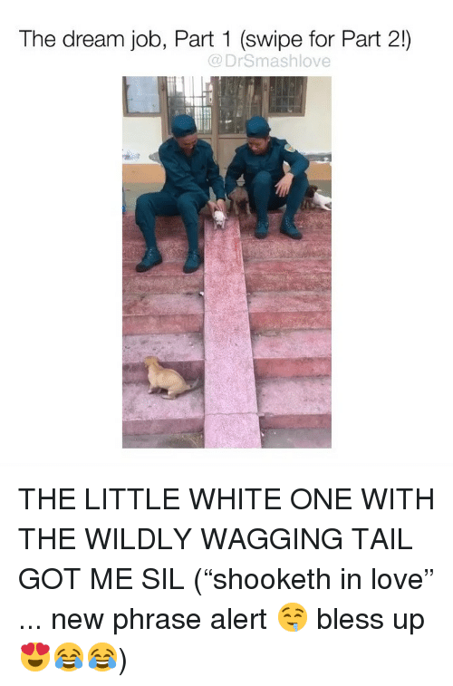 """Wagging: The dream job, Part 1 (swipe for Part 2!)  @DrSmashlove  il THE LITTLE WHITE ONE WITH THE WILDLY WAGGING TAIL GOT ME SIL (""""shooketh in love"""" ... new phrase alert 🤤 bless up 😍😂😂)"""