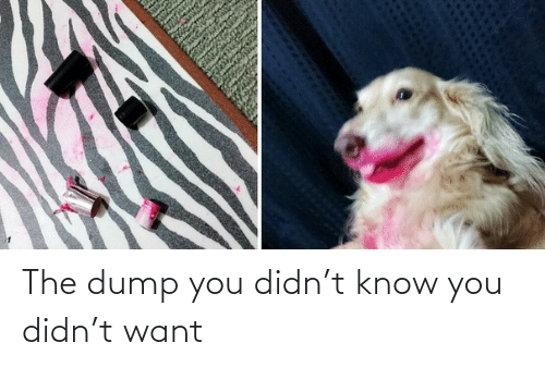 the dump: The dump you didn't know you didn't want