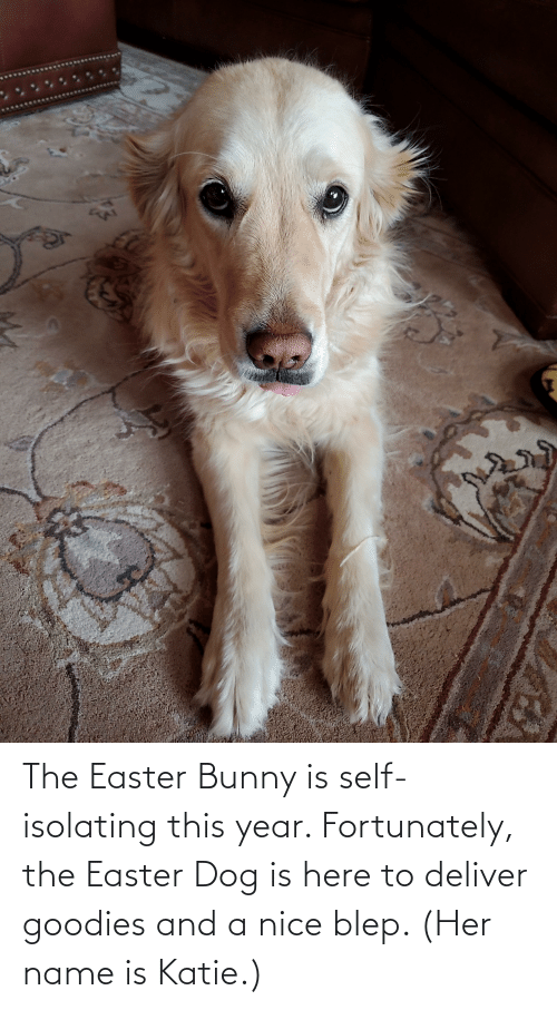 deliver: The Easter Bunny is self-isolating this year. Fortunately, the Easter Dog is here to deliver goodies and a nice blep. (Her name is Katie.)