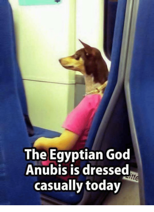 egyptian god: The Egyptian God  Anubis is dresse  casually today
