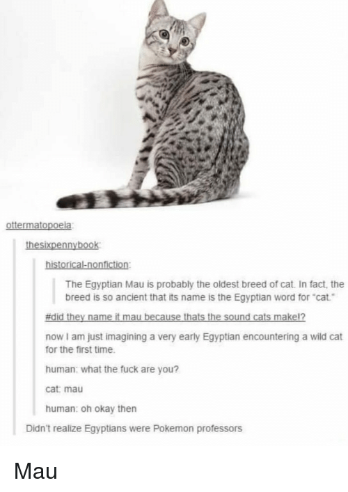 "mau: The Egyptian Mau is probably the oldest breed of cat. In fact, the  breed is so ancient that its name is the Egyptian word for ""cat  now I am just imagining a very early Egyptian encountering a wild cat  for the first time  human: what the fuck are you?  cat: mau  human: oh okay then  Didn't realize Egyptians were Pokemon professors Mau"