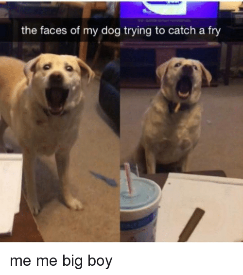 Big Boys: the faces of my dog trying to catch a fry me me big boy