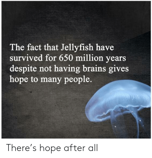 survived: The fact that Jellyfish have  survived for 650 million years  despite not having brains gives  hope to many people. There's hope after all