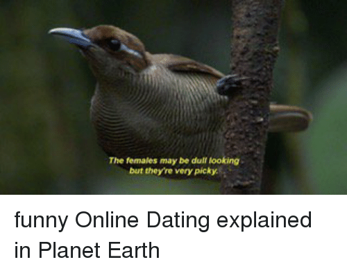 ONLINE DATING EXPLAINED