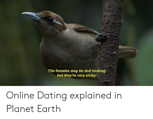 Online dating: The females may be dull looking  but they're very picky. Online Dating explained in Planet Earth