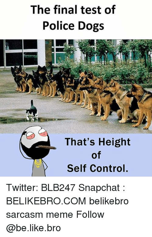 teste: The final test of  Police Dogs  That's Height  of  Self Control, Twitter: BLB247 Snapchat : BELIKEBRO.COM belikebro sarcasm meme Follow @be.like.bro