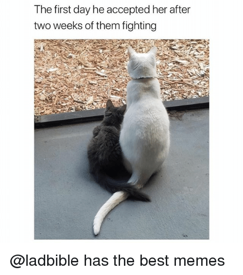 Funny, Memes, and Best: The first day he accepted her after  two weeks of them fighting @ladbible has the best memes