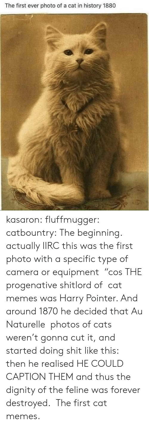 """First Ever: The first ever photo of a cat in history 1880 kasaron:  fluffmugger:  catbountry: The beginning. actually IIRC this was the first photo with a specific type of camera or equipment """"cos THE progenative shitlord of cat memes was Harry Pointer. And around 1870 he decided that Au Naturelle photos of cats weren't gonna cut it, and started doing shit like this: then he realised HE COULD CAPTION THEM and thus the dignity of the feline was forever destroyed.  The first cat memes."""