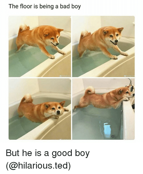 Bad, Funny, and Ted: The floor is being a bad boy But he is a good boy (@hilarious.ted)