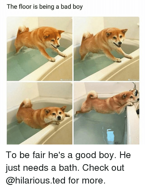 Bad, Memes, and Ted: The floor is being a bad boy To be fair he's a good boy. He just needs a bath. Check out @hilarious.ted for more.