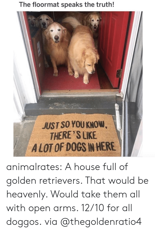 heavenly: The floormat speaks the truth!  JUST SO YOU KNOW  THERE SLIKE  A LOT OF DOGS IN HERE animalrates: A house full of golden retrievers. That would be heavenly. Would take them all with open arms. 12/10 for all doggos. via @thegoldenratio4