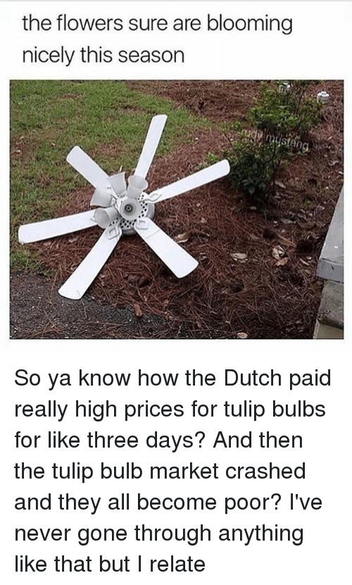 Dutches: the flowers sure are blooming  nicely this season So ya know how the Dutch paid really high prices for tulip bulbs for like three days? And then the tulip bulb market crashed and they all become poor? I've never gone through anything like that but I relate