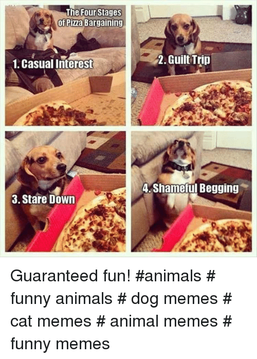 shameful: The Four Stages  of Pizza Bargaining  1, Casual Interest  2. Guilt Trin  A Shameful Begging  3. Stare Down Guaranteed fun! #animals # funny animals # dog memes # cat memes # animal memes # funny memes