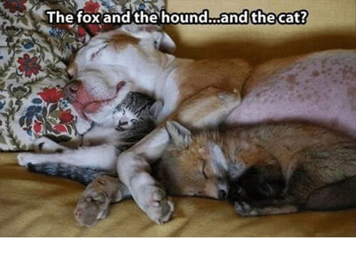 """SIZZLE: The fox""""and thehound  ianatheCat?  died ?  the cat"""