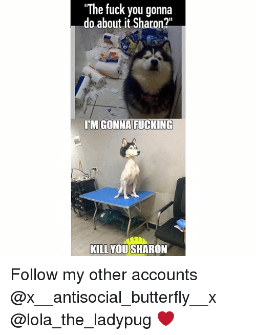 """Fuck You, Fucking, and Memes: """"The fuck you gonna  do about it Sharon?""""  IM GONNA FUCKING  KILL YOU SHARON Follow my other accounts @x__antisocial_butterfly__x @lola_the_ladypug ❤️"""
