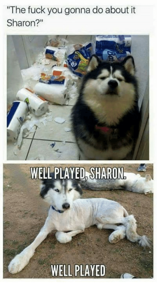 """Fuck You, Memes, and Fuck: """"The fuck you gonna do about it  Sharon?  WELL PLAYED SHARON  WELL PLAYED"""