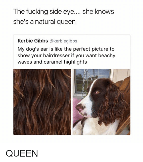 side-eye: The fucking side eye....she knows  she's a natural queen  Kerbie Gibbs @kerbiegibbs  My dog's ear is like the perfect picture to  show your hairdresser if you want beachy  waves and caramel highlights QUEEN