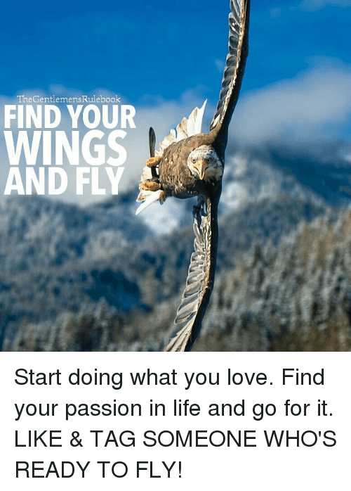 Life, Love, and Memes: The GentlemensRulebook  FIND YOUR  WINGS  D Start doing what you love. Find your passion in life and go for it. LIKE & TAG SOMEONE WHO'S READY TO FLY!