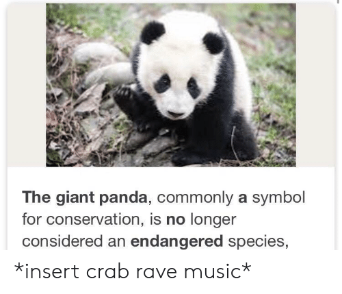 Rave: The giant panda, commonly a symbol  for conservation, is no longer  considered an endangered species, *insert crab rave music*