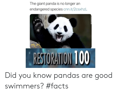 Restoration: The giant panda is no longer an  endangered species cnn.it/2csxhzL  RESTORATION 100 Did you know pandas are good swimmers? #facts