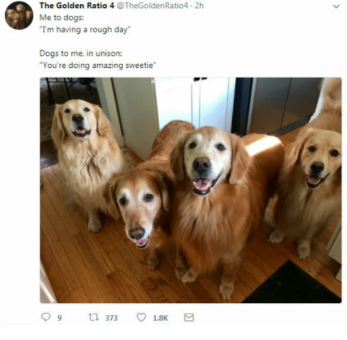 You Re Amazing Animals: The Golden Ratio 4 2h Me To Dogs I'm Having A Rough Day