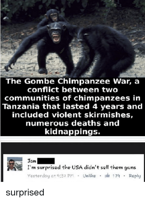 prn: The Gombe chimpanzee war, a  conflict between two  communities of chimpanzees in  Tanzania that lasted 4 years and  included violent skirmishes,  numerous deaths and  kidnappings.  Jan  NS I'm surprised the USA didn't sell them guns  Yesterday at q:32 prn Unlike  17at Reply surprised