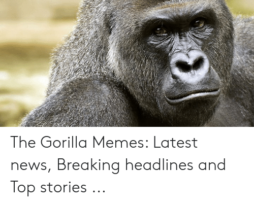 Gorilla Memes: The Gorilla Memes: Latest news, Breaking headlines and Top stories ...